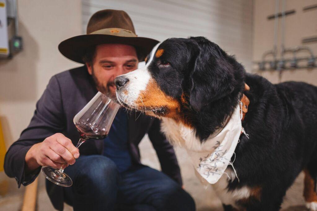 wineink:-here-kitty- -aspentimes.com-–-aspen-times